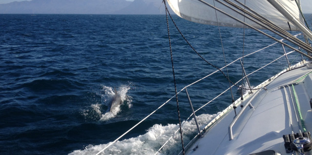 Admiralty Sailing with Dolphins on the way to Isthmus Harbor, Catalina